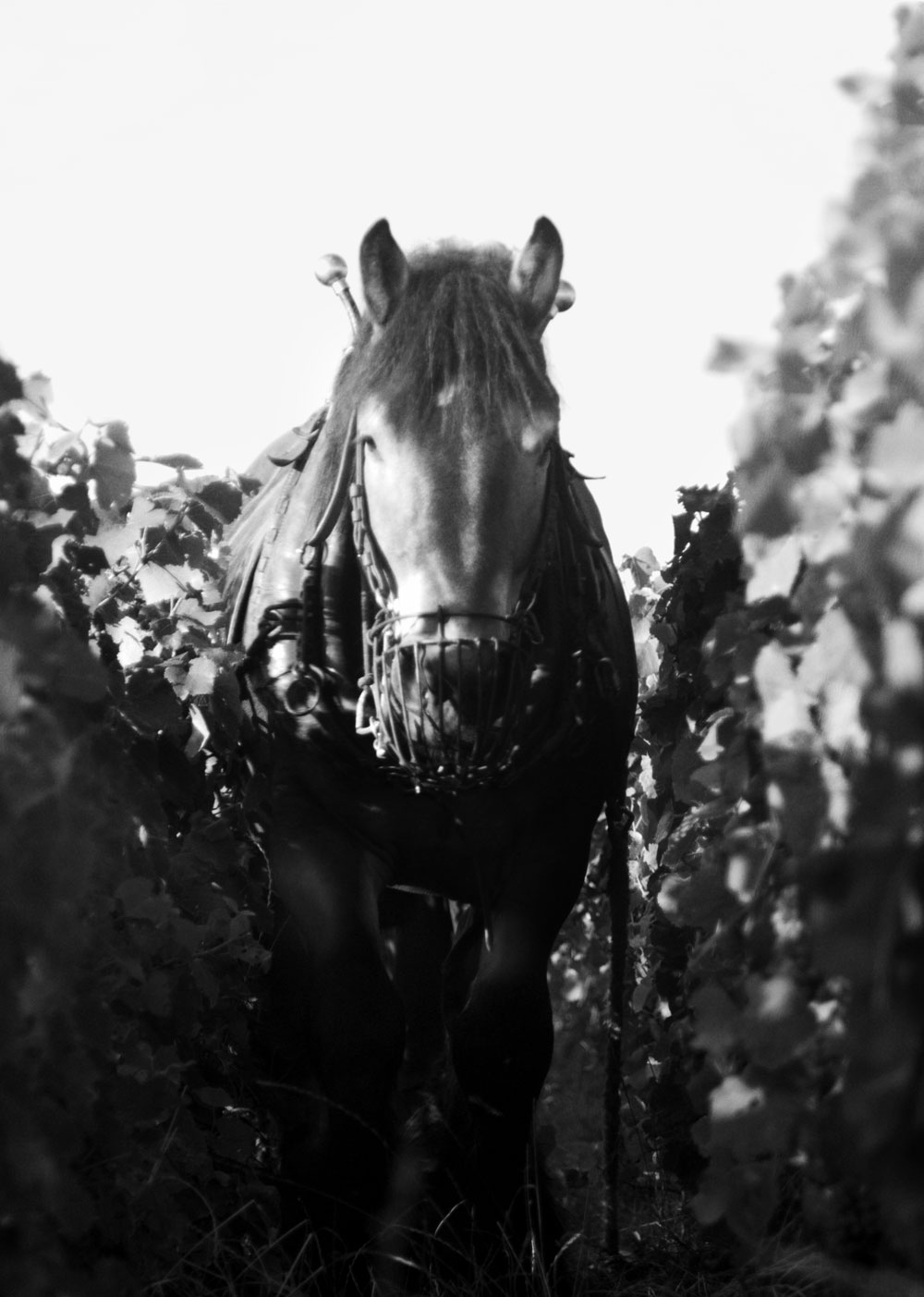 Armand de Brignac Panoramica - Armand de Brignac Champagne